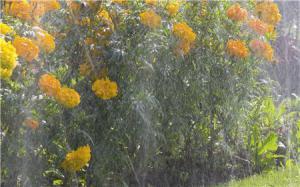 Бережный полив растений